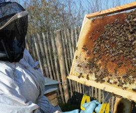 Propriétaires de ruches