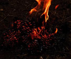 Élagage et feux de broussailles