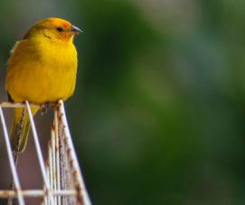 Détenteurs d'oiseaux