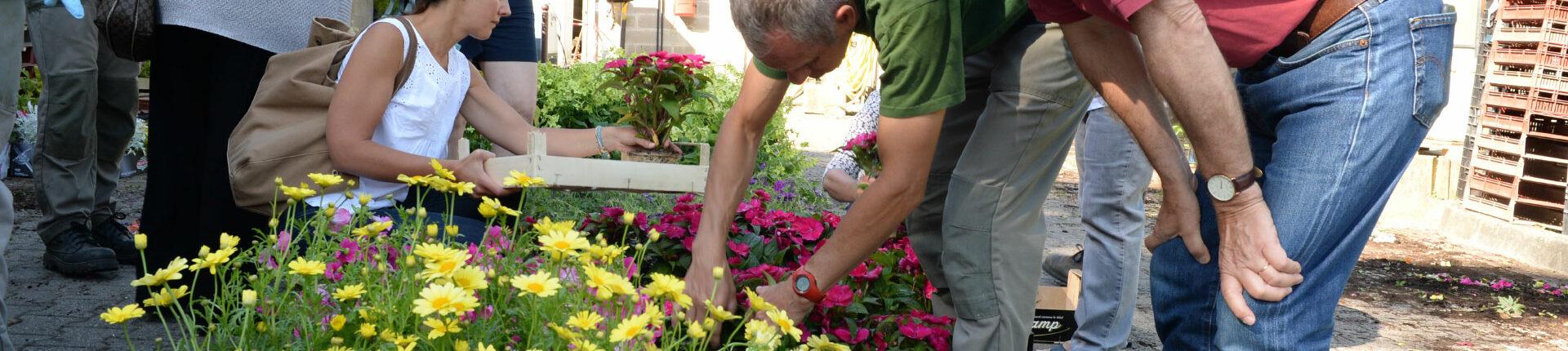 Vente de plantes aux serres municipales