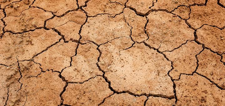 Sécheresse de l'été 2020 : déclarez vos dégâts